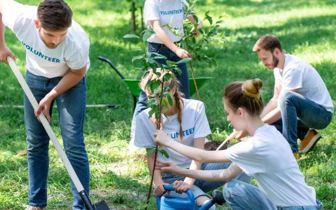 People volunteering and planting new trees in park together